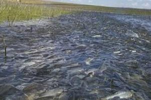 На Ярославском взморье празднуют День рыбака.
